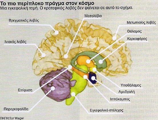 Εγκεφαλος και μνήμη - Που εδρεύει η μνήμη στον εγκέφαλο.