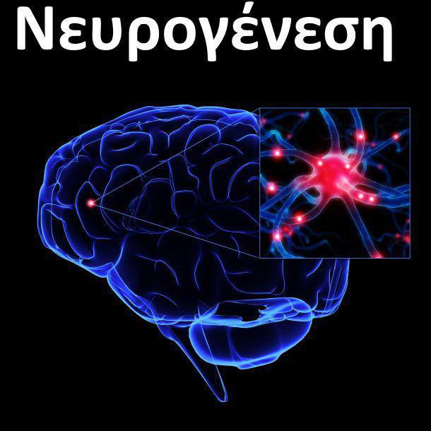 Πως μπορούμε να αναπτύξουμε νέους νευρώνες στον εγκέφαλο.