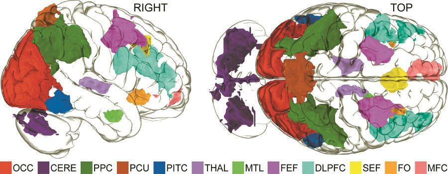 Σχεδόν ολόκληρος ο εγκέφαλος ενεργοποιείται για τη φαντασία.